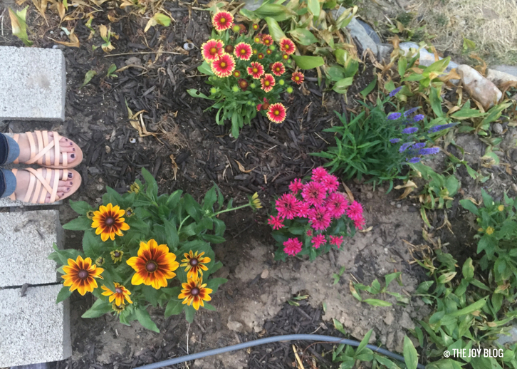 A New Perennial Flower Bed // www.thejoyblog.net