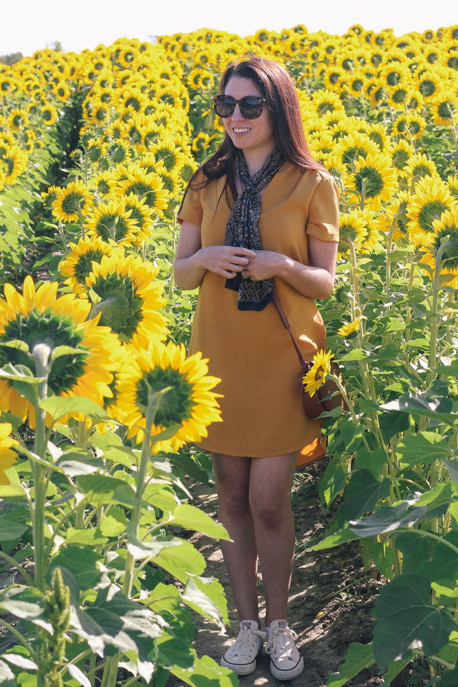Boston Life & Style Blogger, The Northern Magnolia, is featuring the perfect day to night mustard-colored dress for a family day visiting the sunflower fields of Colby Farm in Newbury, Massachusetts.
