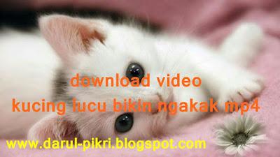 download video kucing lucu bikin ngakak mp4