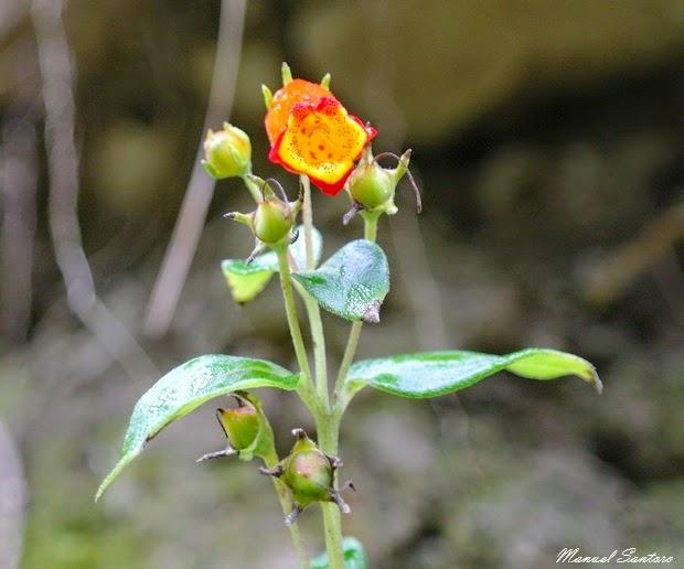 Catarata de Gocta, flora