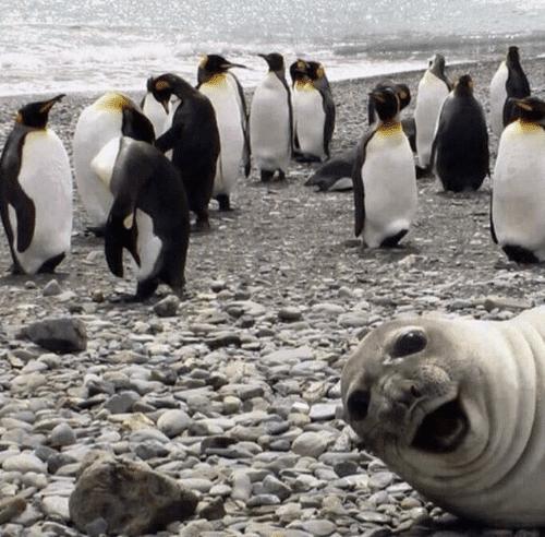 13 Divertidos Photobombs te harán morir de risa