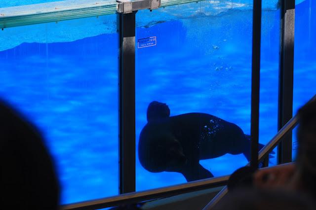 piscina zoo