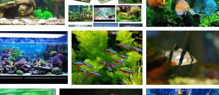 Ini Dia 5 Cara Merawat Ikan Hias di Kolam dan Toples Tanpa Oksigen yang Baik
