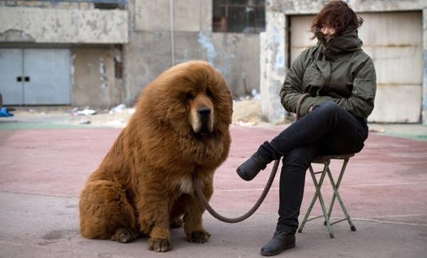 Hayvan Klişeleri - Köpek
