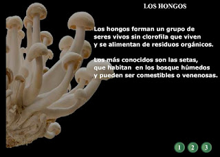 http://www.ceiploreto.es/sugerencias/averroes/manuelperez/hongos.swf