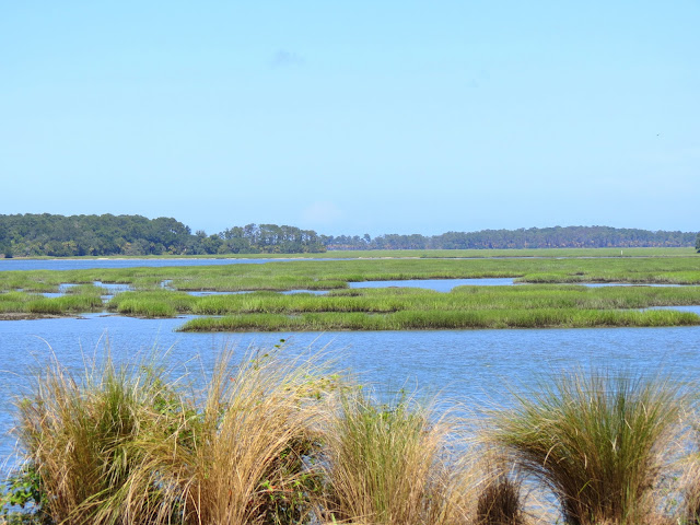palmetto bluff marsh view