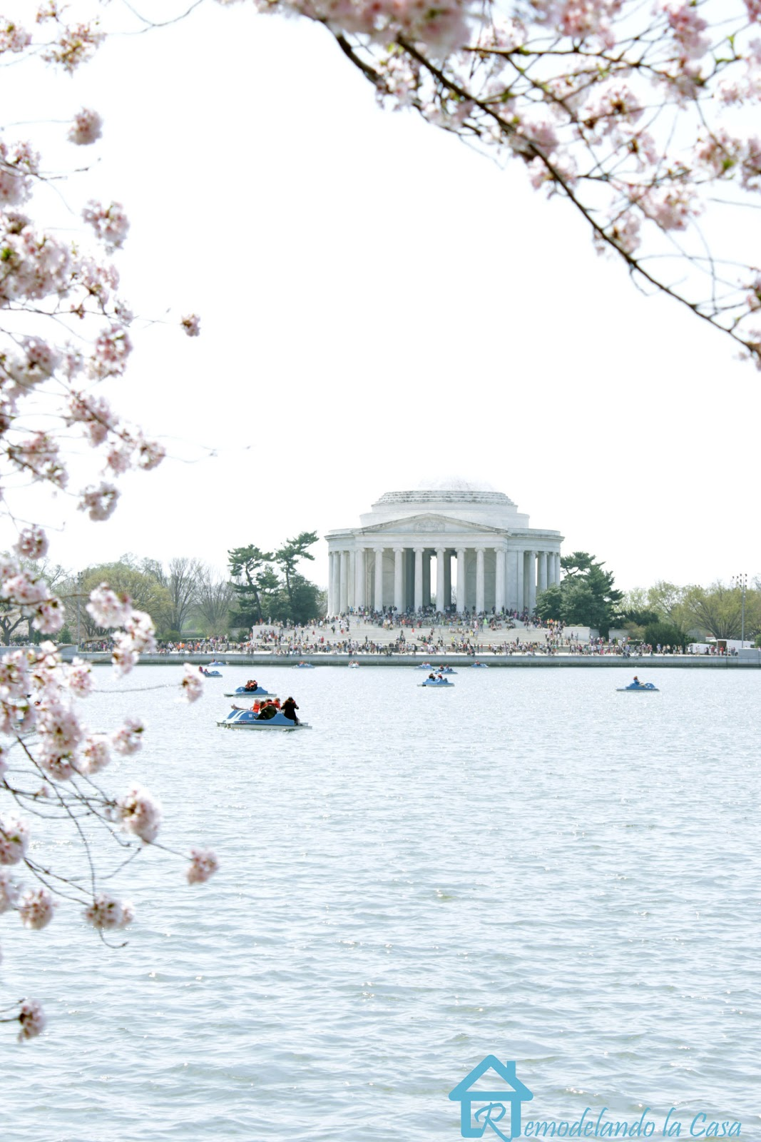 Jefferson Memorial - Cherry Blossom Festival