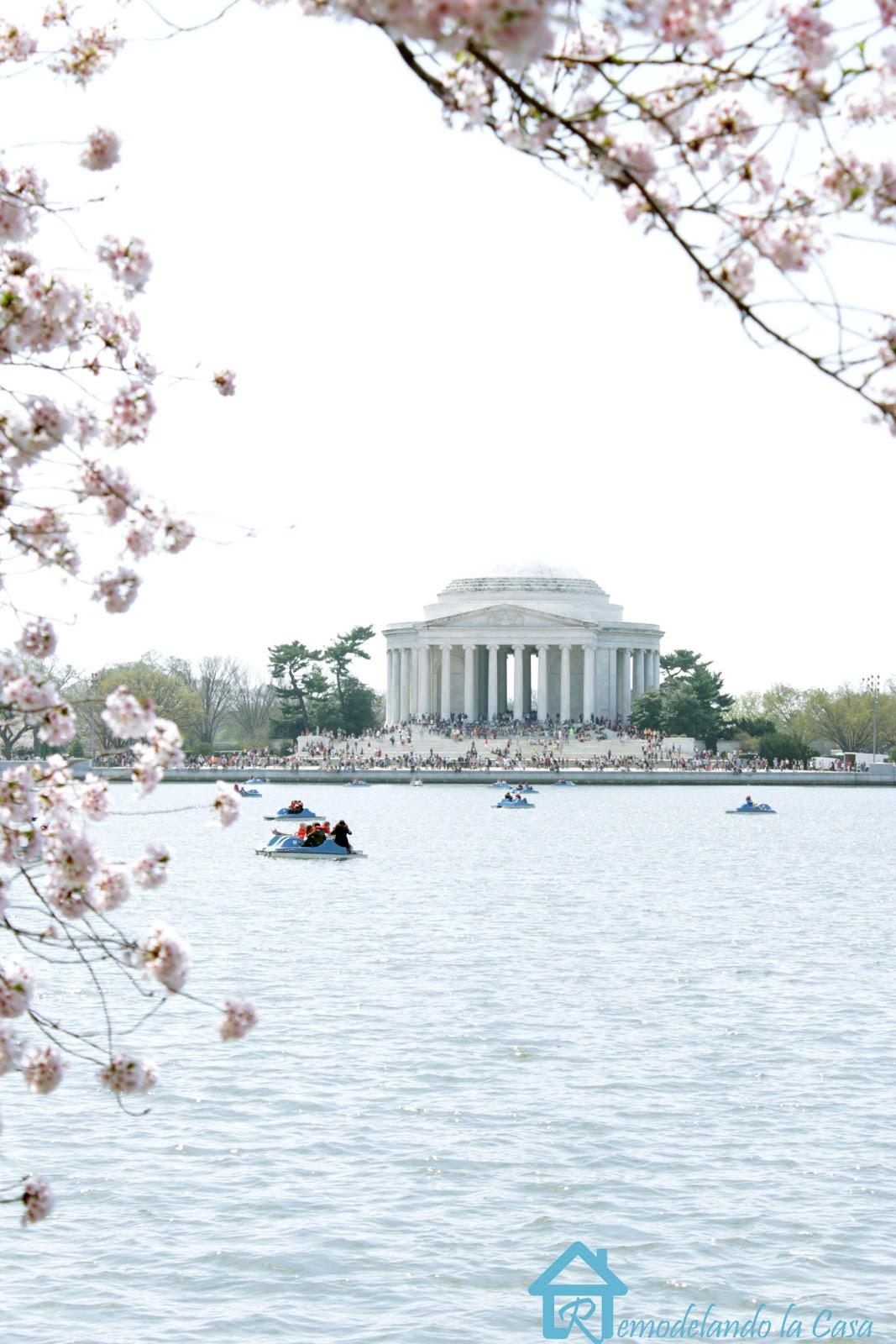Jefferson Memorial - Cherry Blossom Festival