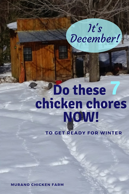 Chickens prepping for winter