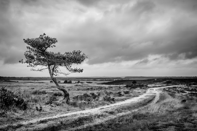 Studland black and white landscape of a lone tree and empty track through heathland