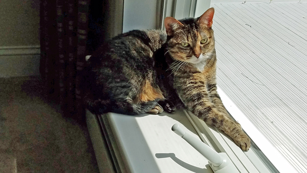 image of Sophie the Torbie Cat sitting in a windowsill in the sunshine
