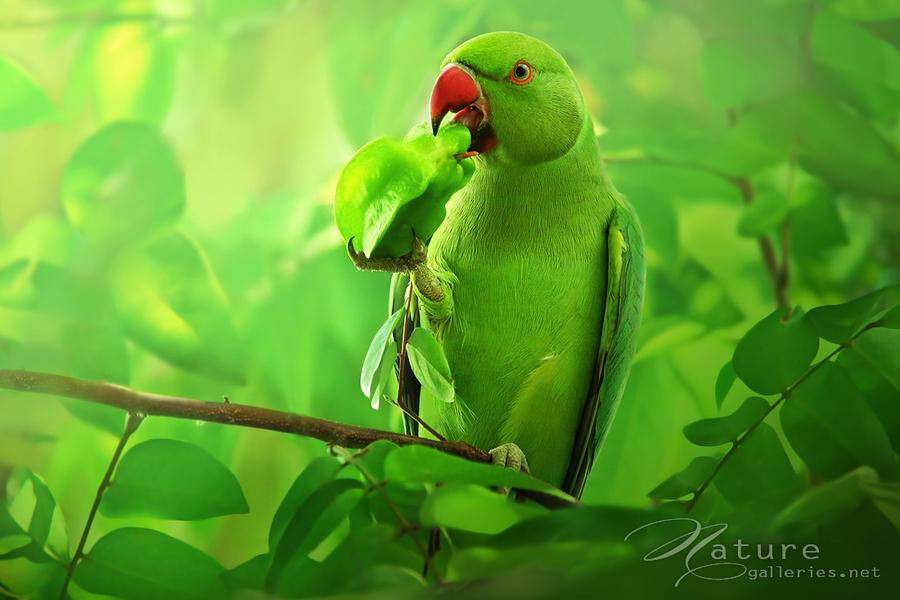 Colorful bird pictures bird wallpaper animal photo - Animal and bird hd wallpaper ...