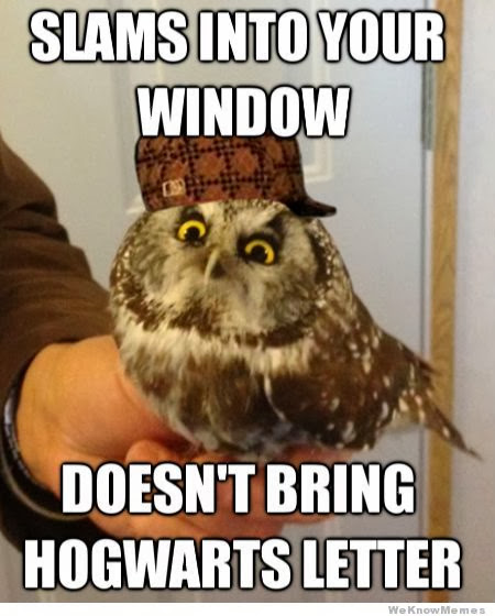 16 Funny Owl Memes - For Fum And Interesting Articles   Feafum