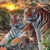 Quantos tigres estão na imagem? Se tu acertar é porque és um gênio!