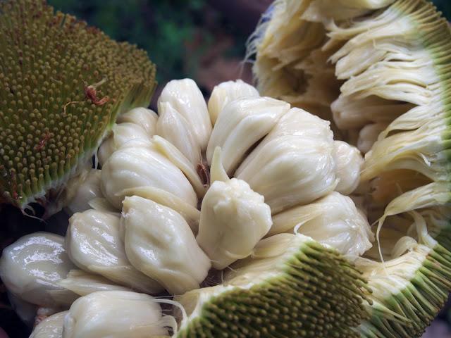 Polpa Interna Jackfruit