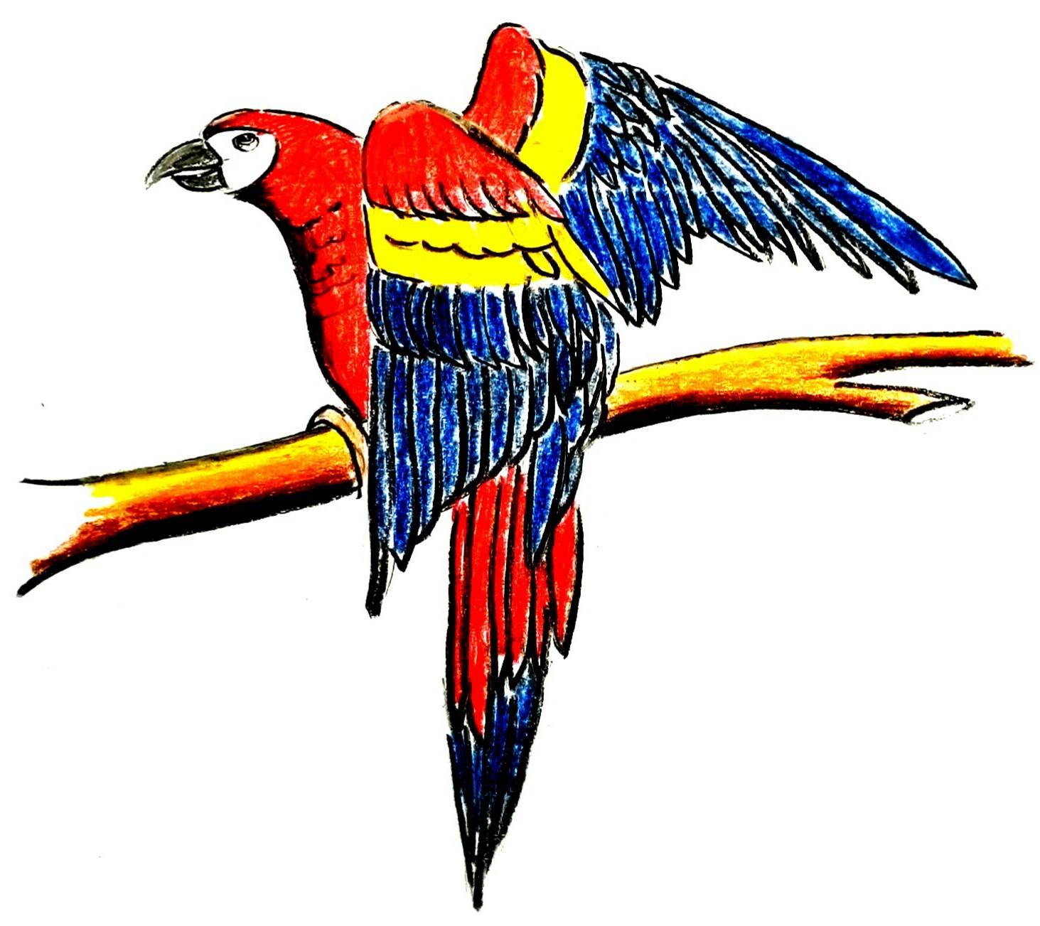 Cara Menggambar Burung Kaka Tua Parrot