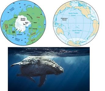 Pasifik Okyanusu Hakkında ilginç