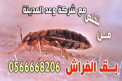 شركة مكافحة حشرات بالمدينة المنورة تخلص من البق نهائياً