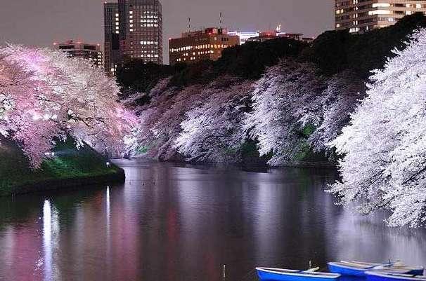 Chiyoda-no-Sakura Matsuri, Yasukuni-jinja Shrine, Chidorigafuchi and others, Chiyoda-ku, Tokyo
