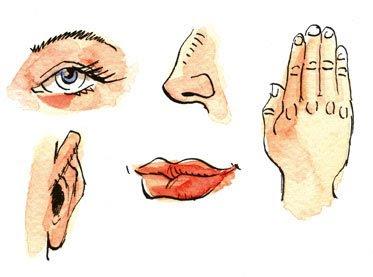 أهمية الحواس الخمس