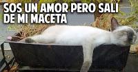 Como alejar a los gatos de las macetas - 1