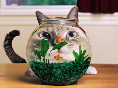 Funny Cat and Fish Standard Resolution HD Wallpaper