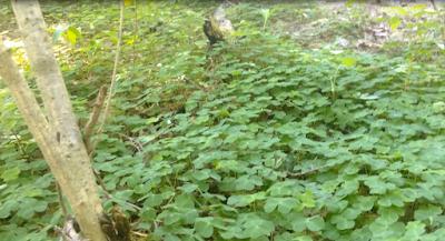 Природа в лесу, спортивная база отдыха Псков
