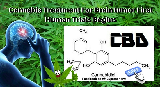 Cannabis For Brain tumor First Human Trials Begins