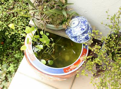 水鉢ビオトープ