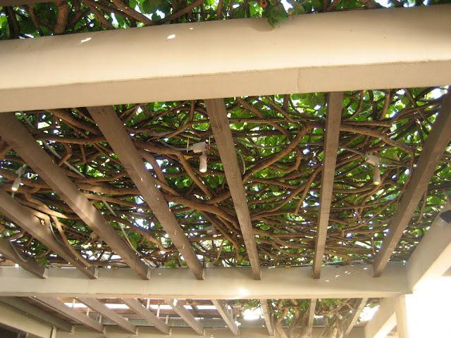 Guies Access Grape Arbor Trellis Plans