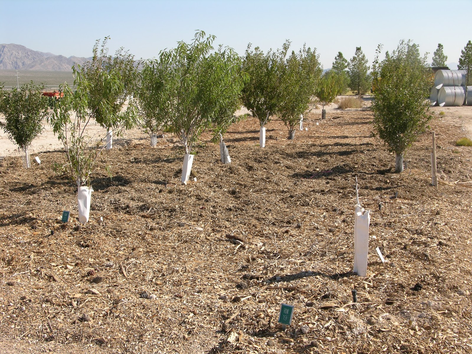 Xtremehorticulture of the desert how to water apricot for Soil near me