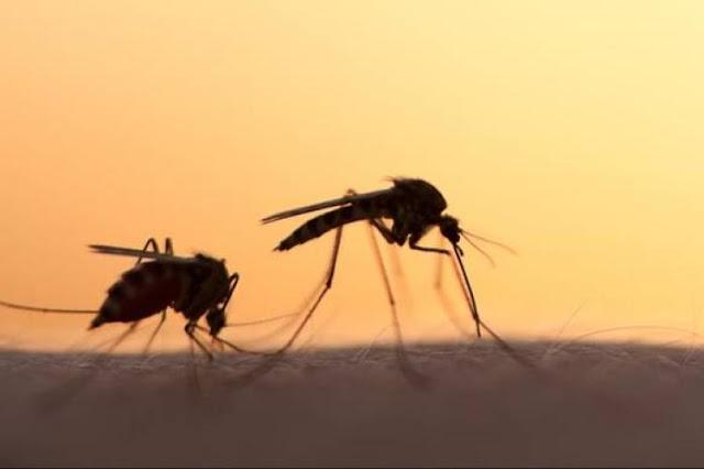 13 τα κρούσματα του ιού του Δυτικού Νείλου στην Αργολίδα