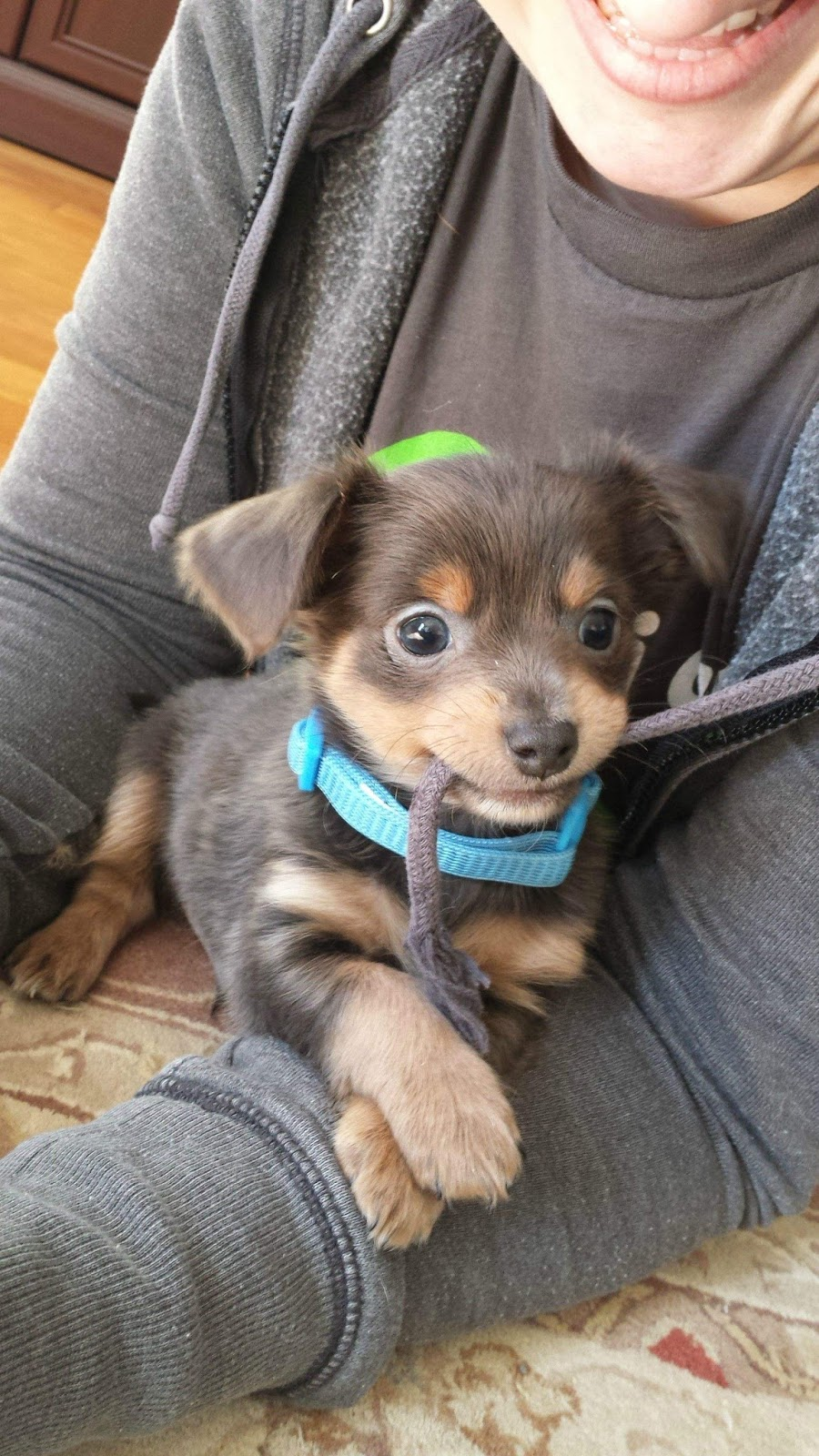 Cute Puppies 17 Pics: Cute Dogs - Part 150 (50 Pics)