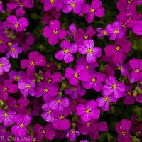 April flowers mature video
