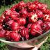 Lợi ích của hoa atiso đối với sức khỏe