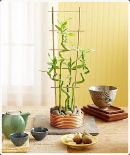 Şifalı Bitkiler 15