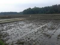 Petani Minta Sungai Kapal Dilakukan Normalisasi
