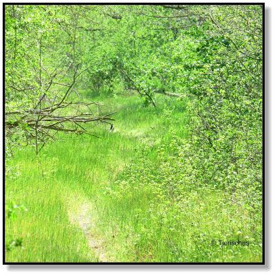 Osterspaziergang durch den Wald