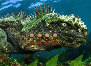 Juegos de Escape - Underwater Man Incredible Rescue Escape