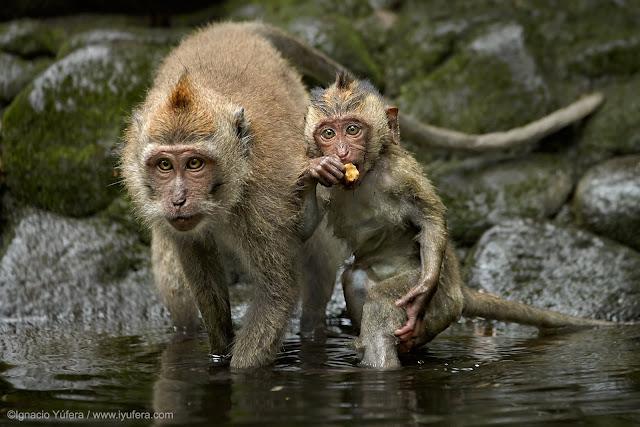 Ubud's Sacred Monkey Forest, Bali