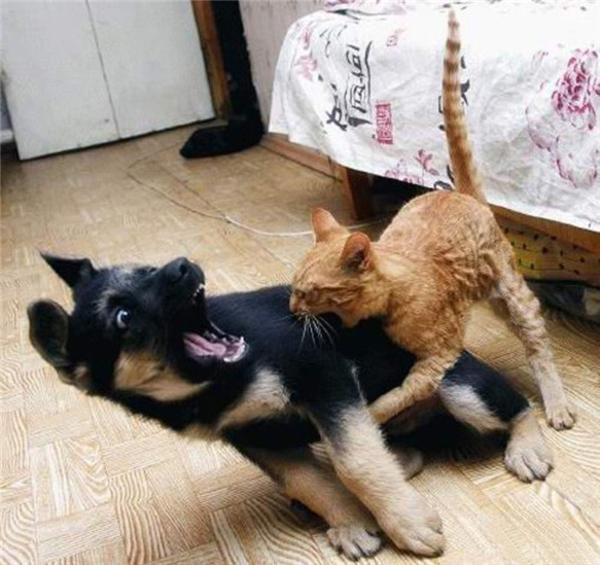 Khi các đại boss có thù với nhau từ kiếp trước