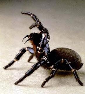 ragni per disfunzione erettile