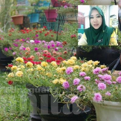 3 cara untuk bunga rose jepun merimbun satu taman