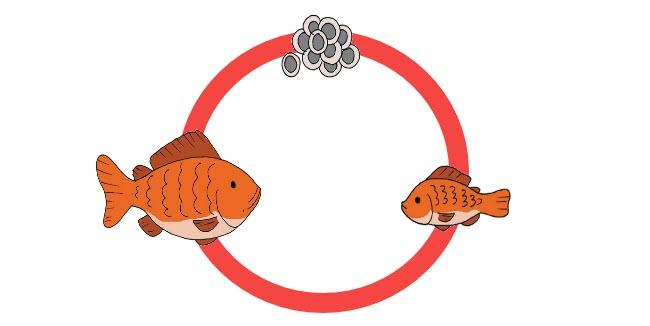 Daur Hidup Ikan