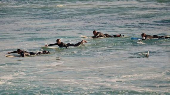 Terrifying moment surfers paddle for their lives as a four-metre shark hunts them