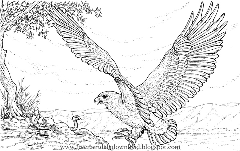 Vector: flying eagle coloring page | Coloring pages nature ... | 505x800