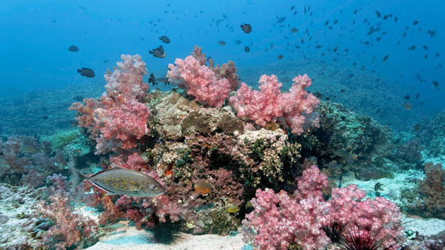 Alarma científica: El fondo del océano se disuelve y el culpable es el ser humano