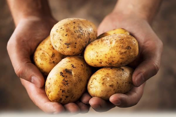 Nhờ những củ khoai tây, cô giáo đã giúp học sinh nhận ra một bài học lớn thay đổi cuộc đời