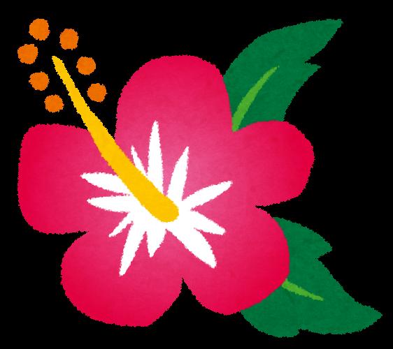 https://2.bp.blogspot.com/-XvV50z9UCA8/UgSL5EAx9YI/AAAAAAAAW28/m0PMXA8y2U4/s800/flower_hibiscus.png