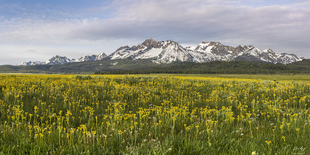 pppp  Sawtooth Range Wilderness mountains from near Stanley, Idaho with wildflowers.